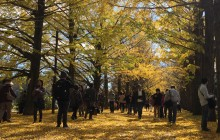 20151121iPhone昭和記念公園 012